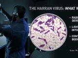 Harran-Virus