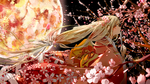 月下桜天国 BG