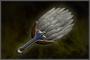 Strategist's Fan (DW4)