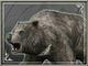 Bear (SWC)