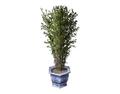 Indoor Plant 5 (DWO)