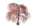 Plum Blossom 3 (DWO)