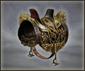 Jeweled Harness (DW5XL)