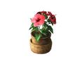 Ornamental Plant 1 (DWO)