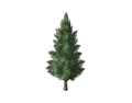 Christmas Tree 1 (DWO)