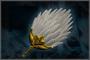 White Feather (DW4)