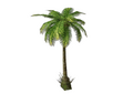 Palm Tree 2 (DWO)