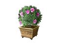 Indoor Plant 7 (DWO)