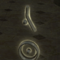 File:Charged Rune (LLE).png