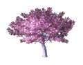 Ornamental Cherry Tree 3 (DWO)