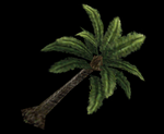 DW6E Palm Tree