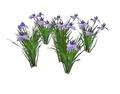 Iris 3 (DWO)