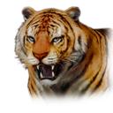 Normal Tiger (DWU)