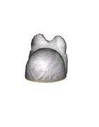 Male Head 38D (DWO)