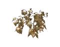 Lantern Plant Fruit 4 (DWO)