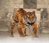 Tiger (DW7)