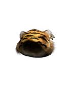 Male Head 45A (DWO)