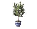 Indoor Plant 4 (DWO)