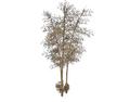 Bamboo 4 (DWO)