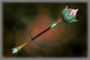 Imperial Mace (DW3)