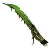 Green Dragon (DWU)