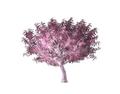 Ornamental Cherry Tree 2 (DWO)