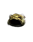 Male Head 45D (DWO)