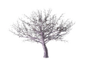 Ornamental Cherry Tree 4 (DWO)