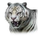 White Tiger (DWU)