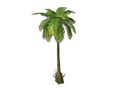 Palm Tree 3 (DWO)