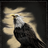 awatar użytkownika Thorondor, The lord of eagles