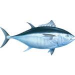Intergalactic Tuna