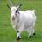 Goatix's avatar