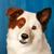 Stan The Dog