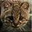 Lgcfm's avatar