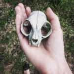 Catrip's avatar