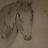 Life for Horsess Avatar
