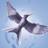 Shine998's avatar