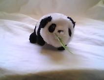 Panda Pic
