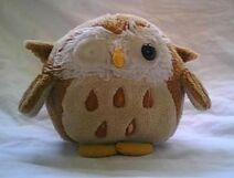 Owly Pic