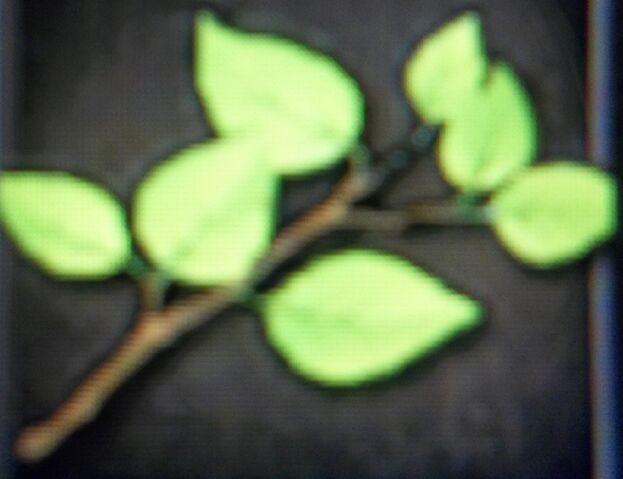 File:Tree Branch.JPG
