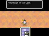 Сумасшедшая утка