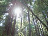 Wyrm Wood