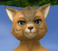 Intense female feline