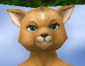 Normal female feline face