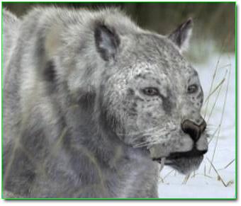 File:European lion.jpg