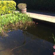 Walford Park Pond 2 (2015)