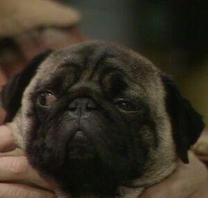Willy (Ethel's Dog)