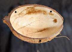 Craftbits coconut shell bird feeder