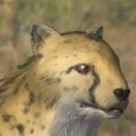 Mountain Lion/Template:Customheader